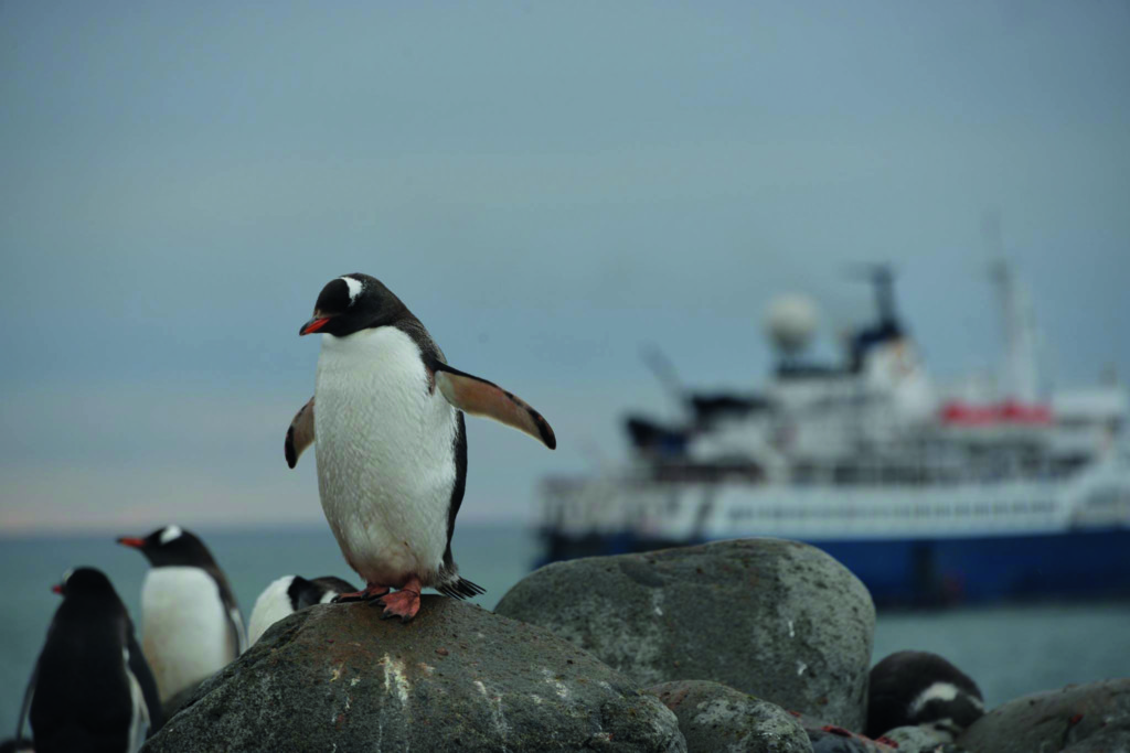 Kayak antarctique
